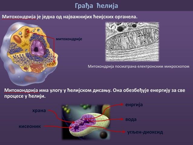 Грађа ћелија једрова мембрана хроматин (наследни материјал) једарце Једро У свакој ћелији је смештен наследни материјал (х...