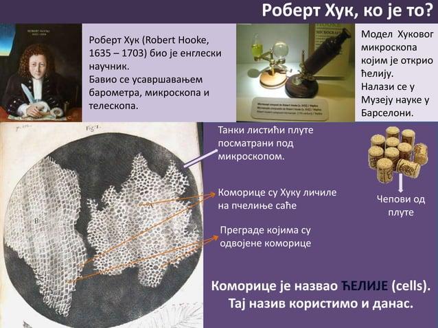 Роберт Хук, ко је то? Роберт Хук (Robert Hooke, 1635 – 1703) био је енглески научник. Бавио се усавршавањем барометра, мик...