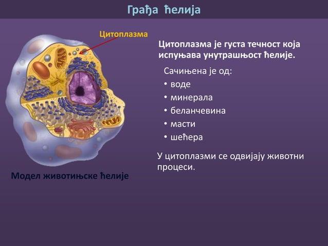 Грађа ћелија Ћелијске органеле су сићушна телашца видљива само електронским микроскопом . Свака ћелијска органела има одре...