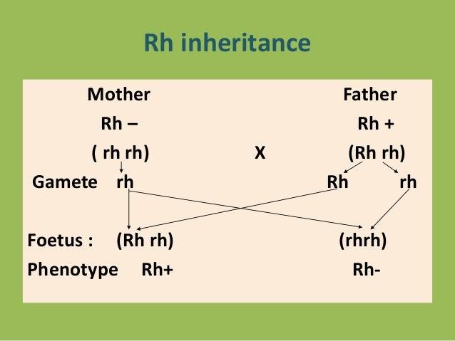 rh factor inheritance pattern
