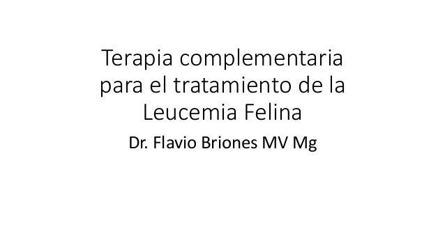 Terapia complementaria  para el tratamiento de la  Leucemia Felina  Dr. Flavio Briones MV Mg