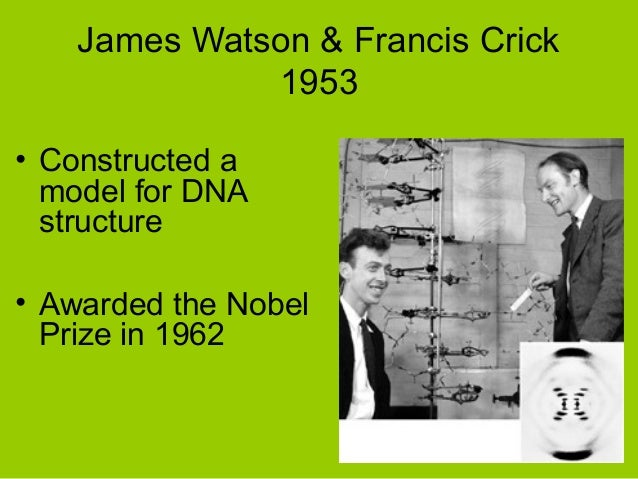 francis cricks work in discovering the dna molecule The discovery of dna's double-helix structure was a major blow to the vitalist   and rosalind franklin at king's college london, in addition to watson and crick  at the  gave watson and crick permission to work full-time on dna's structure.