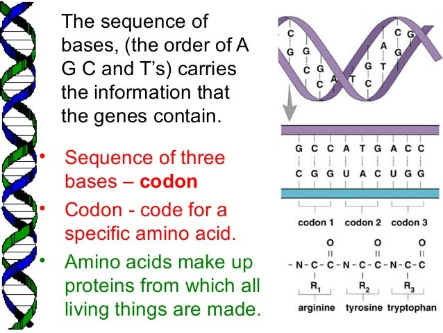 BIOLOGY FORM 5 CHAPTER 5 - 5.3 A (DNA)