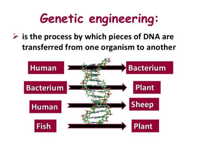 the process of genetic engineering Genetically engineering animals: the process when the term genetic engineering is mentioned, what are the first notions that pop up in your mind for most people, thoughts of fantastical hybrid animals or amalgamations of various connected animal parts appear.