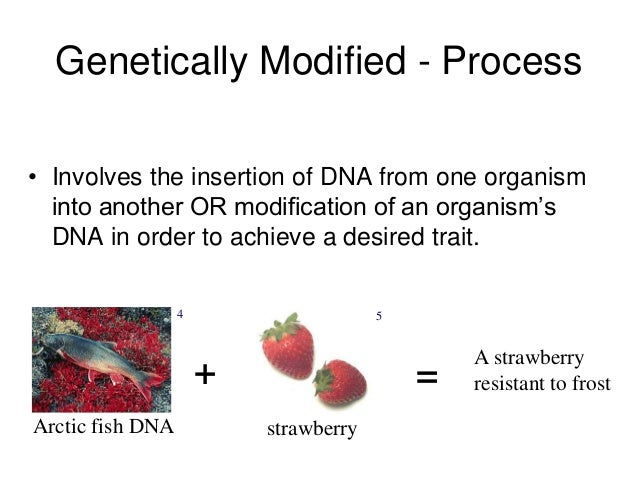 genetically modified organisms on our bodies Genetically modified foods (gm foods), also known as genetically engineered foods (ge foods), or bioengineered foods are foods produced from organisms that have had changes introduced into their dna using the methods of genetic engineering.