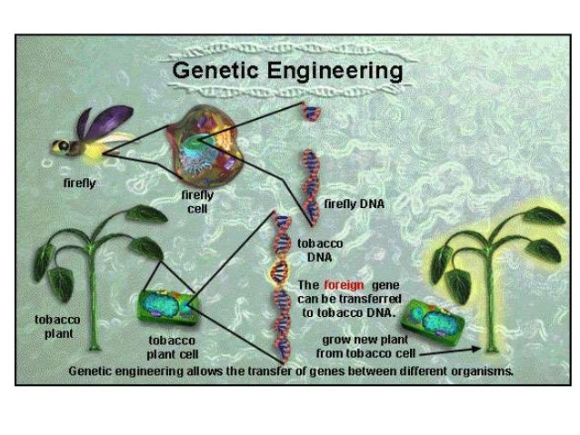 genetic engineering 5 Get this from a library genetic engineering 5 [peter rigby.