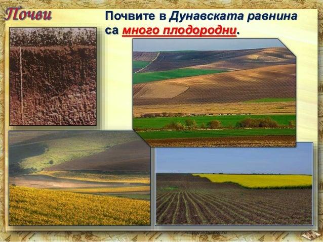 В Дунавската равнина се  отглеждат ценни култури  като:  пшеница  царевица  захарно  цвекло  кайсии  фасул рапица  и  др. ...