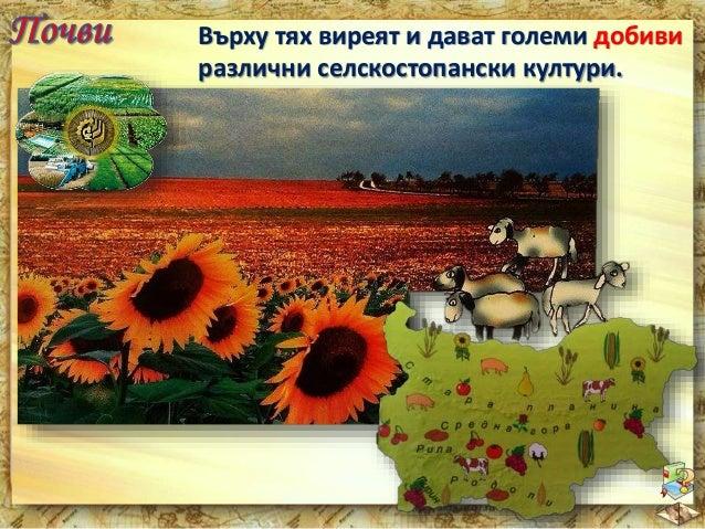 """В източната част на равнината се намира  Добруджа - """"житницата на България""""."""