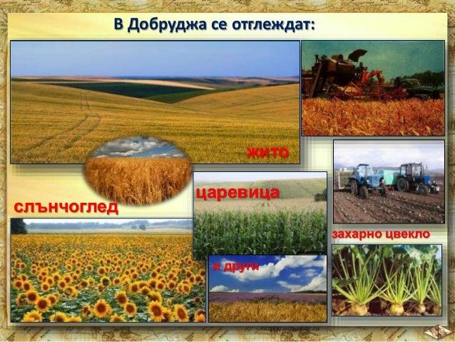 Електроенергия се произвежда в  най-голямата АЕЦ край град Козлодуй.  Електроенергия се  произвежда и в  ТЕЦ край големите...