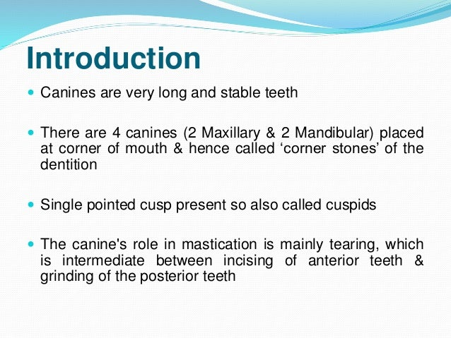 Permanent  Maxillary & Mandibular Canine Slide 2