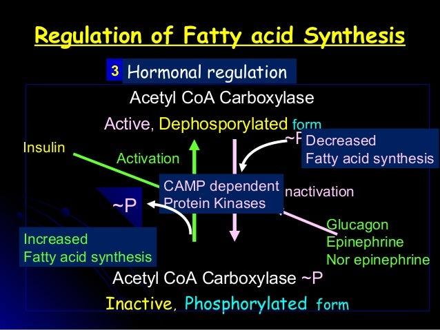 fatty acid synthesis patr 1