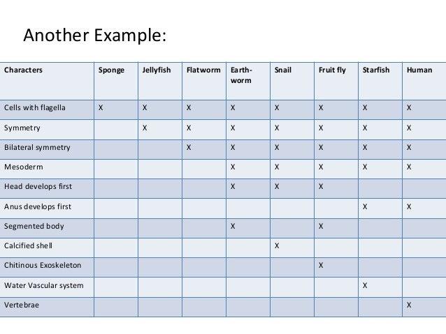 Cladogram Worksheet Cells With Flagella cladogram worksheet – Cladogram Worksheet Answers