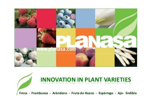 INNOVATION IN PLANT VARIETIES Fresa - Frambuesa - Arándano - Fruta de Hueso - Espárrago - Ajo- Endibia
