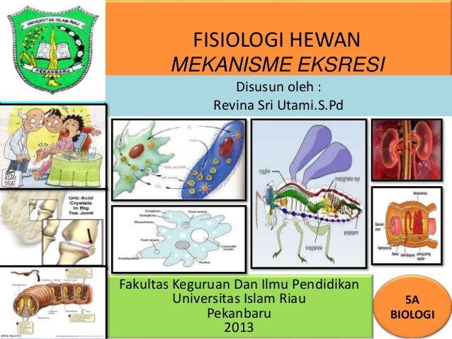 FISIOLOGI HEWAN MEKANISME EKSRESI Fakultas Keguruan Dan Ilmu Pendidikan Universitas Islam Riau Pekanbaru 2013 5A BIOLOGI D...