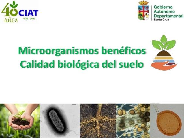 Microorganismos benéficos Calidad biológica del suelo