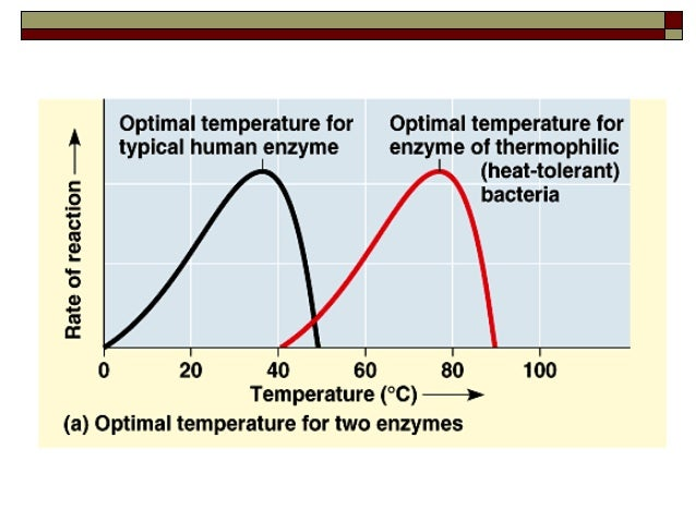 what is the optimum temperature for pepsin activity