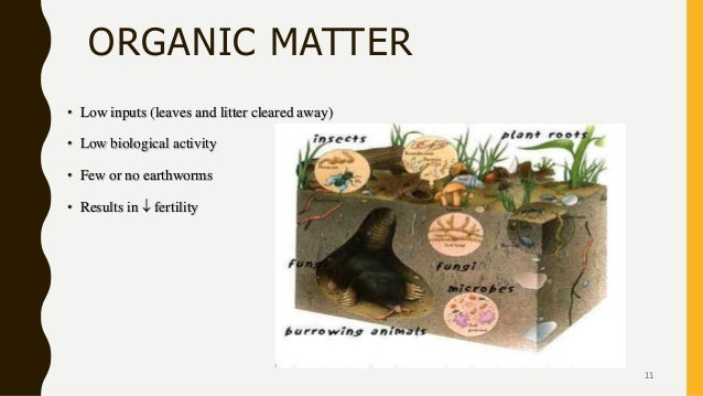ORGANIC MATTER • Low inputs (leaves and litter cleared away) • Low biological activity • Few or no earthworms • Results in...