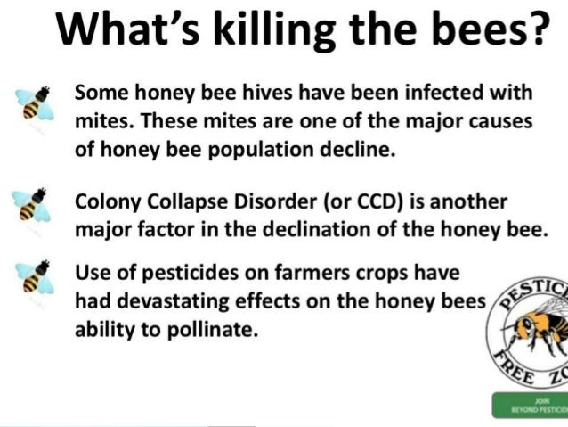 a study of colony collapse disorder or ccd What's causing colony collapse disorder  it had nothing to do with ccd the researcher who conducted the study told the associated press that there is.