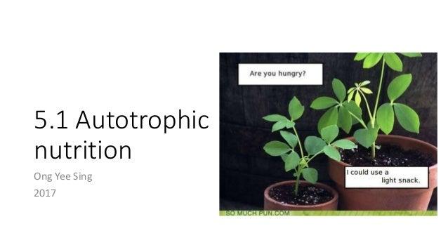 5 1 Autotrophic Nutrition Uec Senior 1 Biology