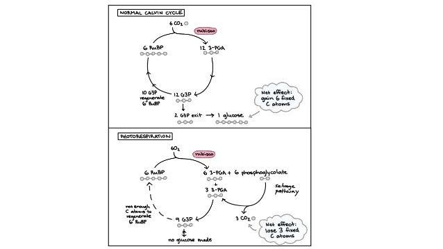 5.1 autotrophic nutrition UEC Senior 1 Biology