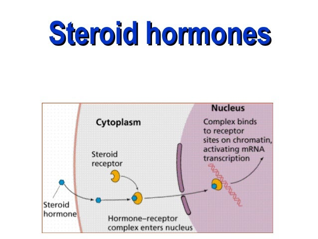 what is a steroid hormone
