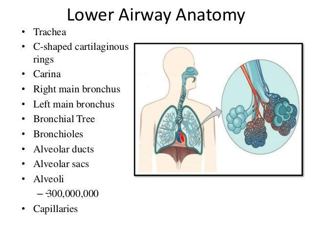 Endotracheal Intubation In Oral Maxillofacial Surgery