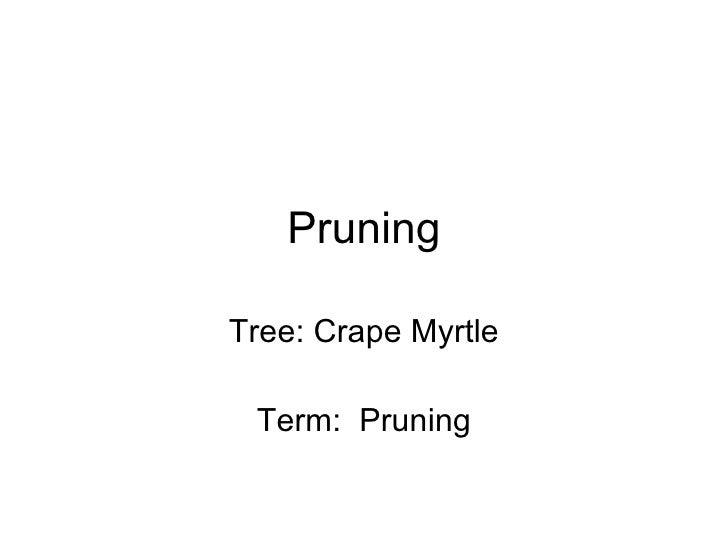 Pruning Tree: Crape Myrtle Term:  Pruning