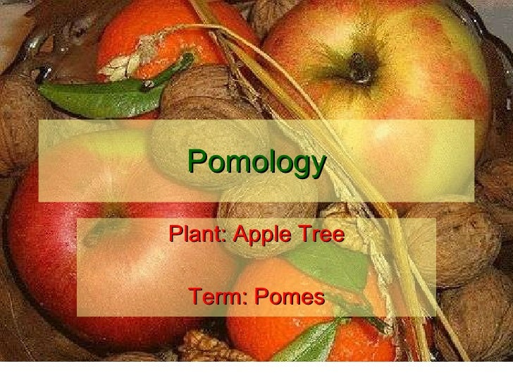 Pomology Plant: Apple Tree Term: Pomes