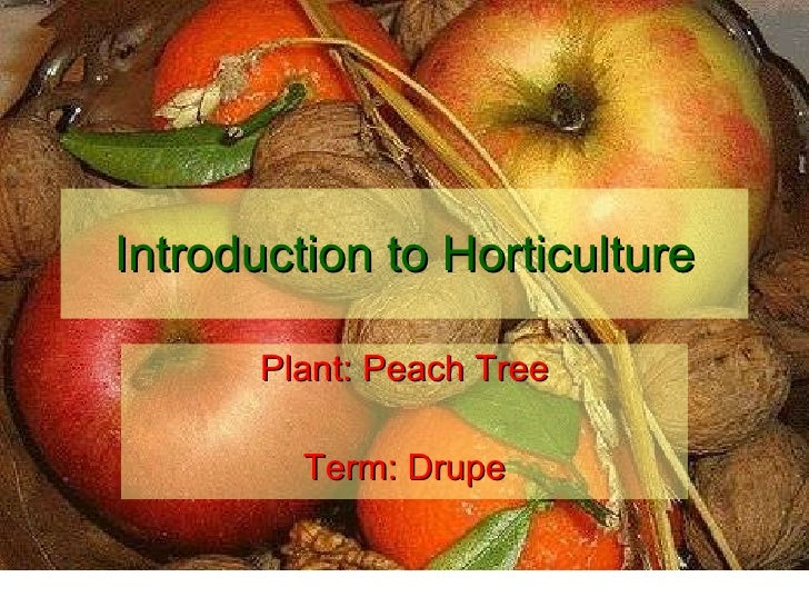 Introduction to Horticulture Plant: Peach Tree Term: Drupe