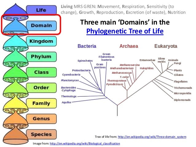 Classification (IB Biology)