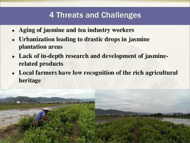 threats in tea industry 68 annex 18: estimated production levels of various tea factories in nepal 69   threats production • greater scope of expansion of tea plantation area.