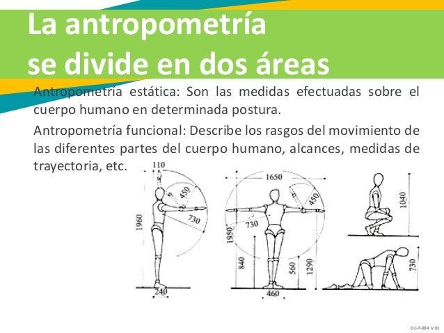 5 antropometr a escala y proporci n for Antropometria estatica