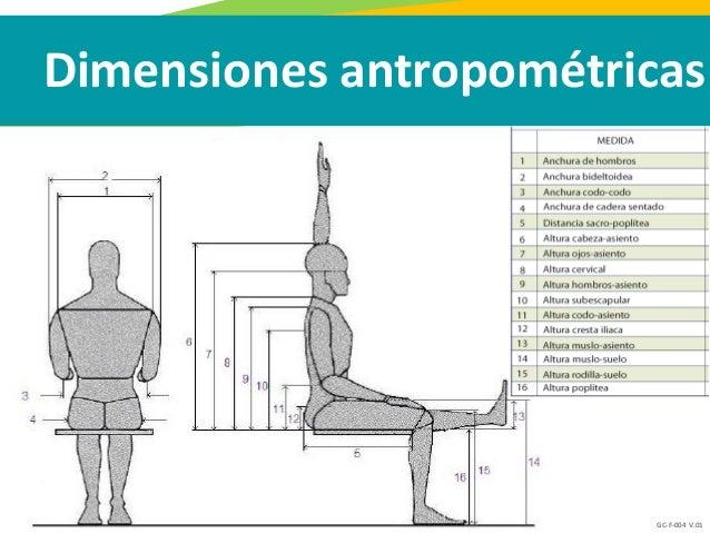 5 antropometr a escala y proporci n for Antropometria medidas