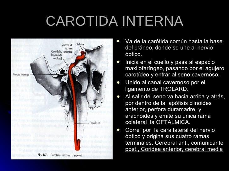 Lujoso Arteria Carótida Interna Regalo - Anatomía de Las Imágenesdel ...