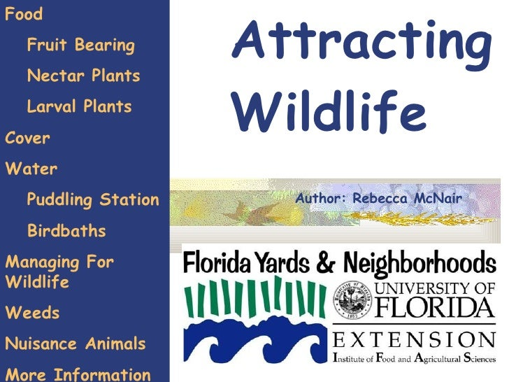 Attracting Wildlife Food Fruit Bearing  Nectar Plants Larval Plants Cover Water Puddling Station Birdbaths  Managing For W...