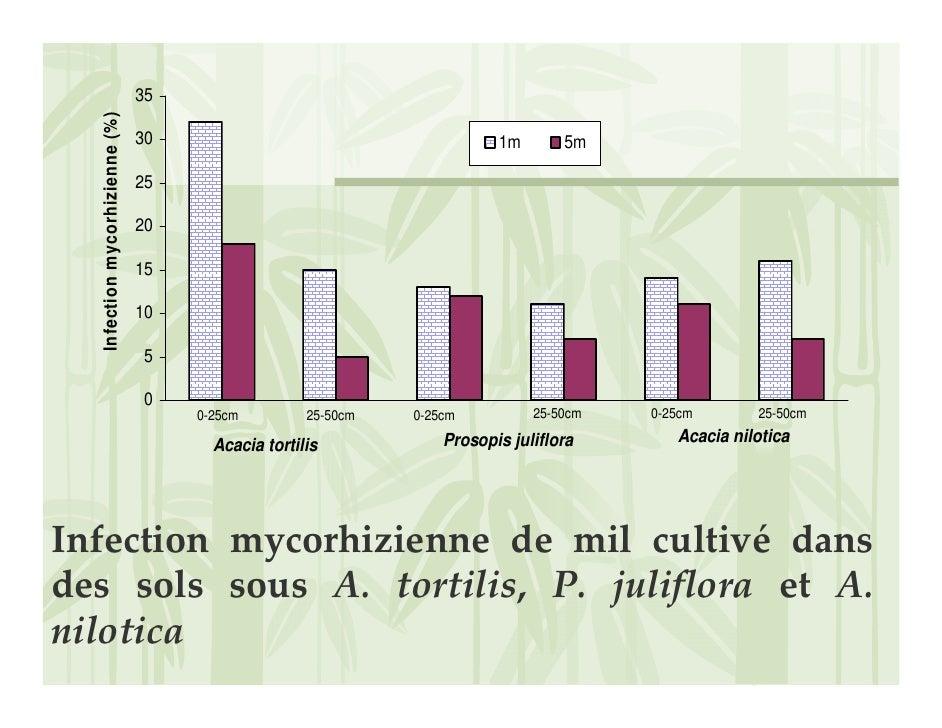 35    Infection mycorhizienne (%)                                  30                                       1m       5m   ...
