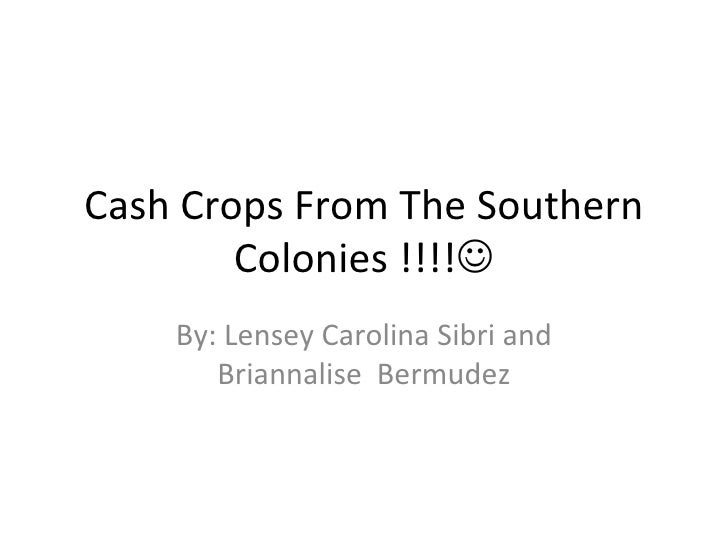 Cash Crops From The Southern Colonies !!!!  By: Lensey Carolina Sibri and Briannalise  Bermudez