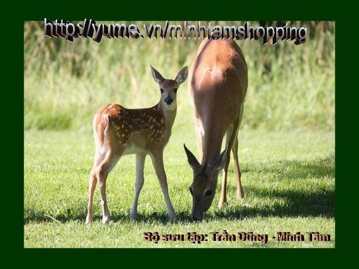 http://yume.vn/minhtamshopping Bộ sưu tập: Trần Dũng - Minh Tâm