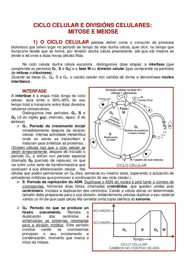 CICLO CELULAR E DIVISIÓNS CELULARES: MITOSE E MEIOSE 1) O CICLO CELULAR  pódese definir coma o conxunto de procesos biolóx...