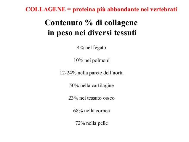 Struttura del collagene Proteina fibrosa Il collagene, una proteina fibrosa, è prodotto da diversi tipi cellulari ma princ...