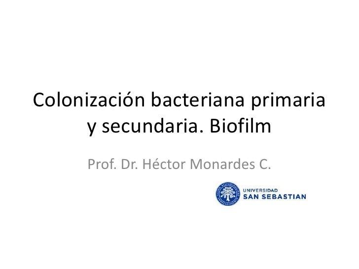 Colonización bacteriana primaria y secundaria. Biofilm<br />Prof. Dr. Héctor Monardes C.<br />
