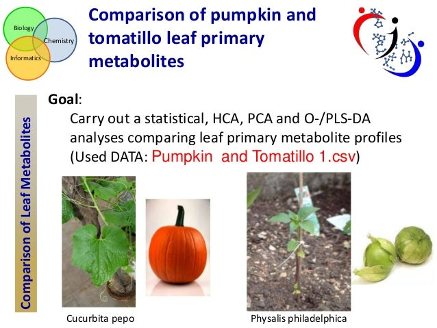 pumpkin patch case study analysis Pumpkin patch increases performance display revenue 10x in 5 months founded in new zealand in 1990, pumpkin patch has been increasingly recognised internationally in providing premium kids.