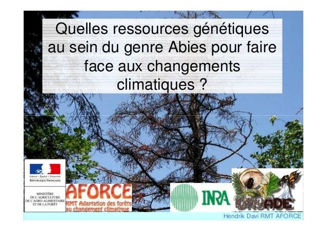 Quelles ressources génétiques  au sein du genre Abies pour faire  face aux changements  climatiques ?  Hendrik Davi RMT AF...