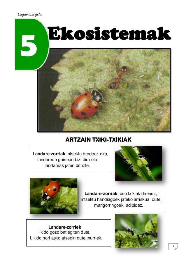 Laguntza gela  5  Ekosistemak  ARTZAIN TXIKI-TXIKIAK Landare-zorriak intsektu berdeak dira, landareen gainean bizi dira et...