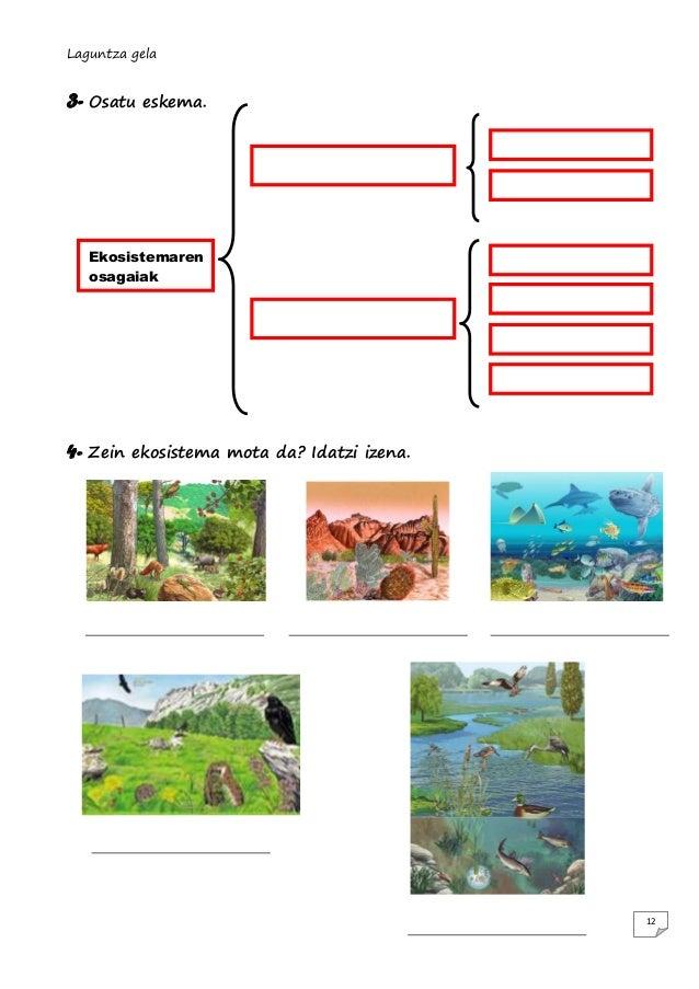 Laguntza gela  3- Osatu  eskema.  Ekosistemaren osagaiak  4- Zein  ekosistema mota da? Idatzi izena.  12