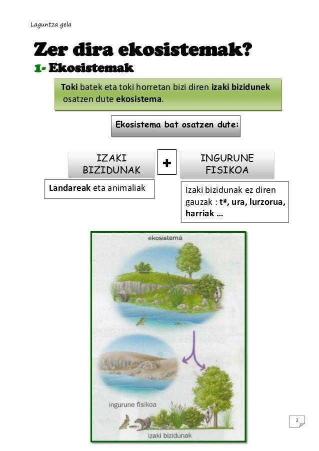 Laguntza gela  Zer dira ekosistemak? 1- Ekosistemak Toki batek eta toki horretan bizi diren izaki bizidunek osatzen dute e...