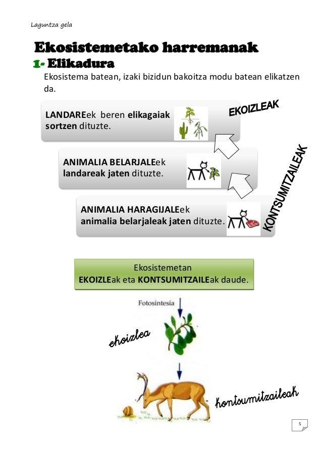 Laguntza gela  Ekosistemetako harremanak 1- Elikadura Ekosistema batean, izaki bizidun bakoitza modu batean elikatzen da. ...