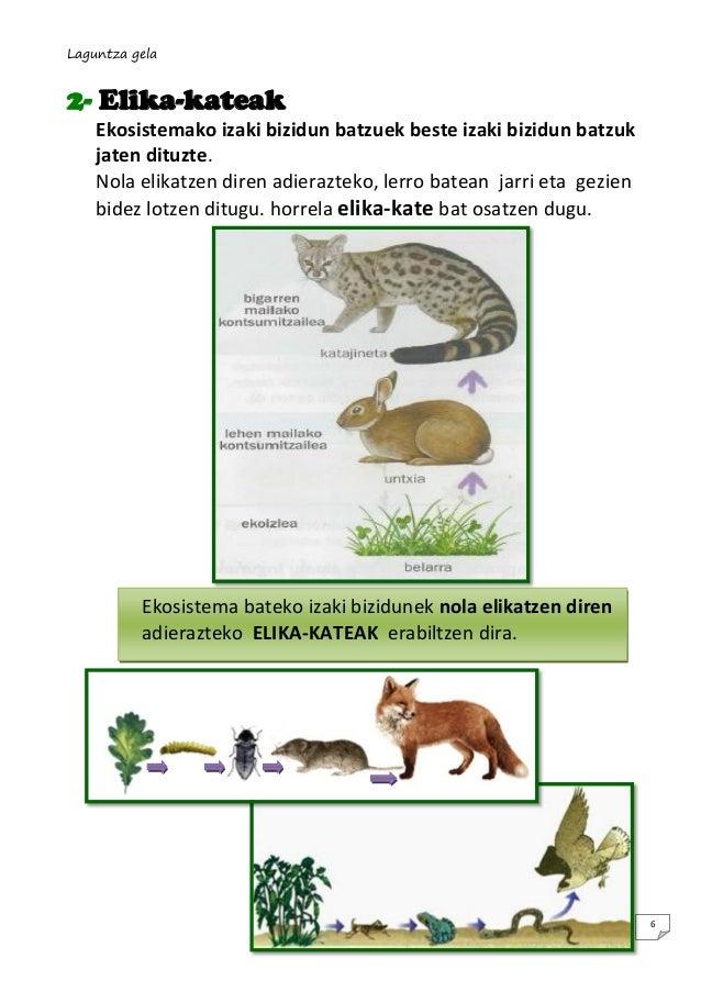 Laguntza gela  2- Elika-kateak Ekosistemako izaki bizidun batzuek beste izaki bizidun batzuk jaten dituzte. Nola elikatzen...