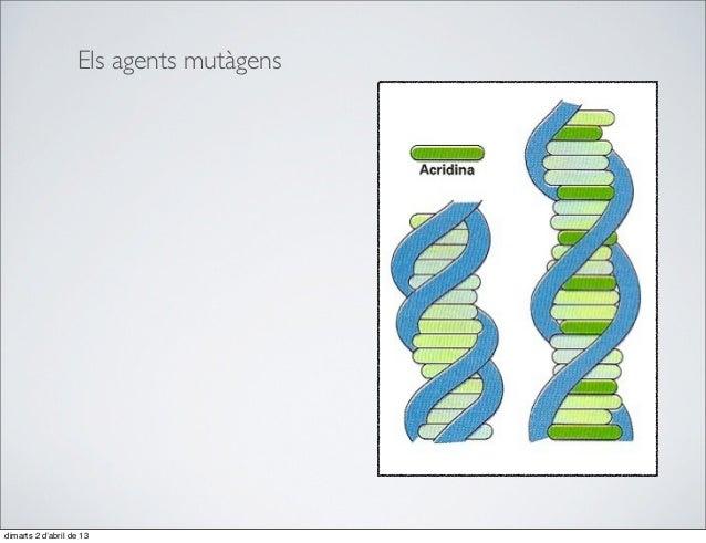 Els agents mutàgensdimarts 2 d'abril de 13