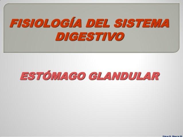 FISIOLOGÍA DEL SISTEMA       DIGESTIVO ESTÓMAGO GLANDULAR
